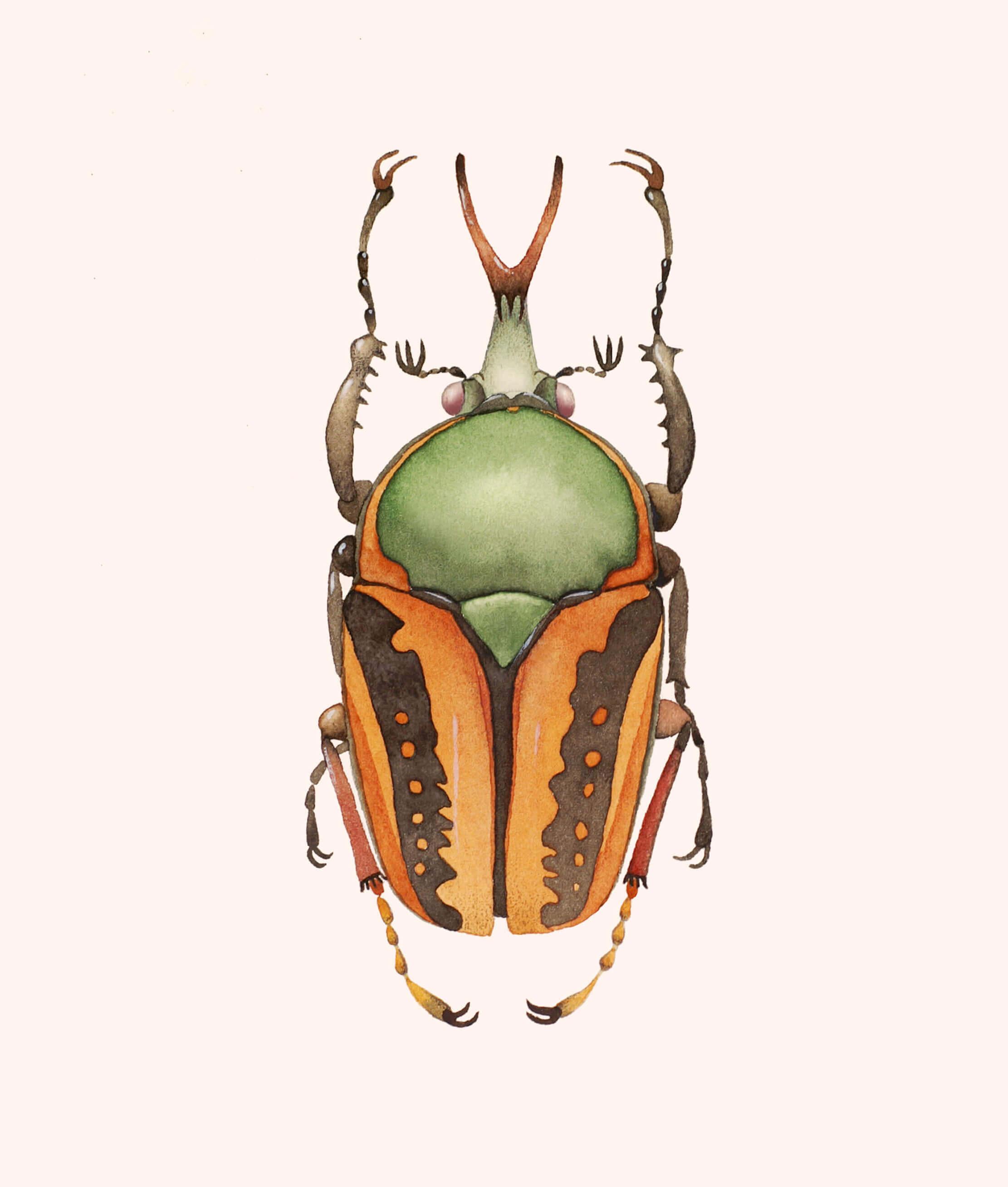 African scarab beetle